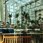 A look at the large fish lagoon at Gaylord Palms