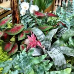 Plants inside the Gaylord Palms in the Key West Section