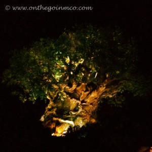 Disney's Animal Kingdom - Tree of Life at Night