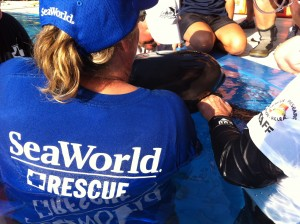 SeaWorld Orlando's Animal Rescue Team, along with several agencies, responded to 22 short-finned pilot whales that stranded at Florida's Avalon State Park Beach in St. Lucie County.