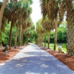 Palm tree lined path