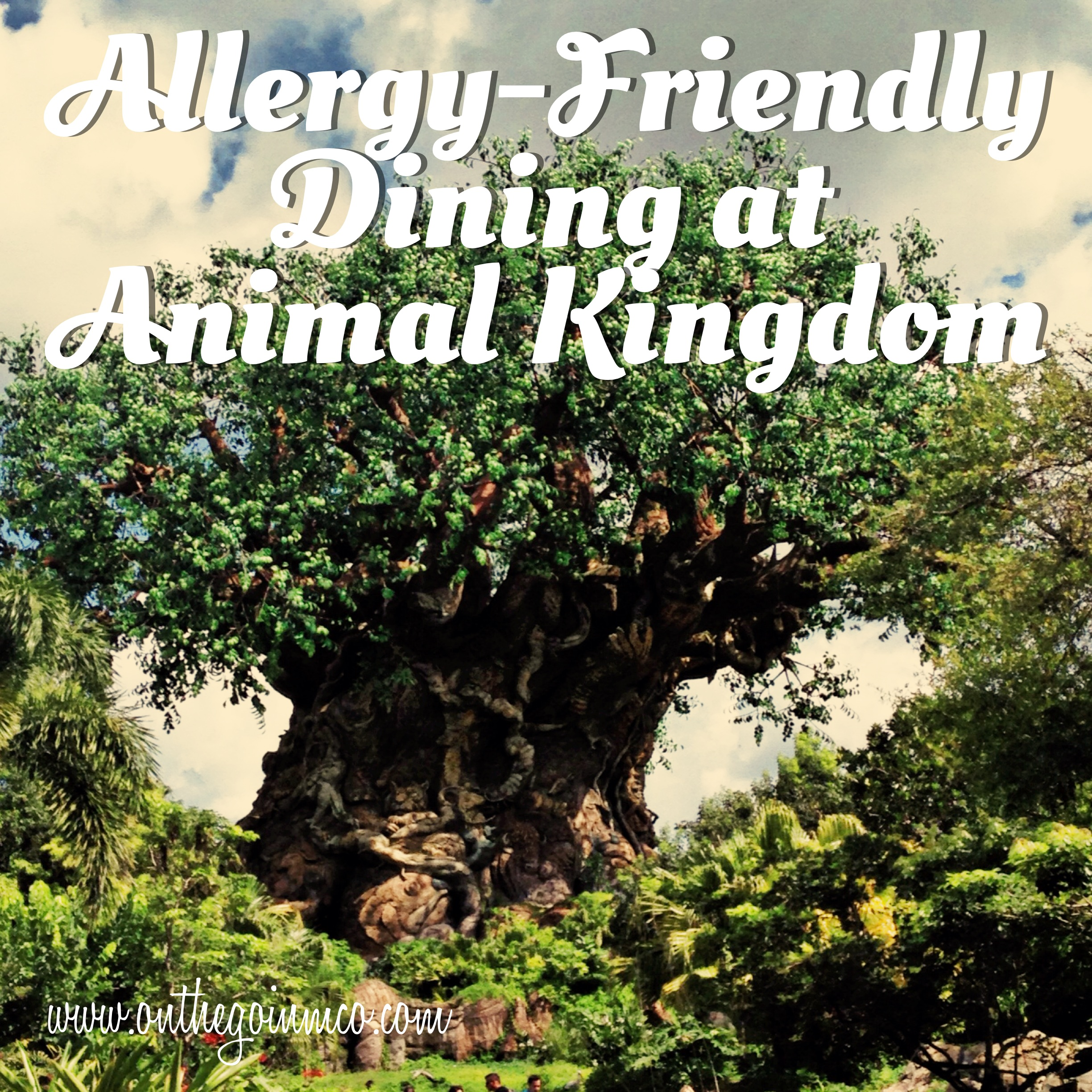 allergy friendly dining at animal kingdom on the go in mco