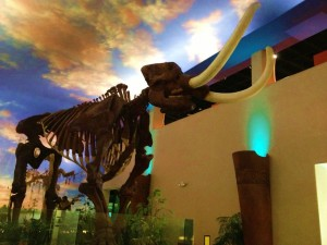 Mastodon at South Florida Museum