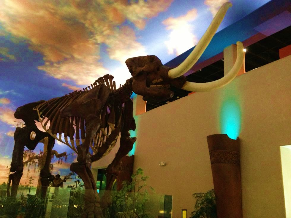 South Florida Museum and Parker Aquarium