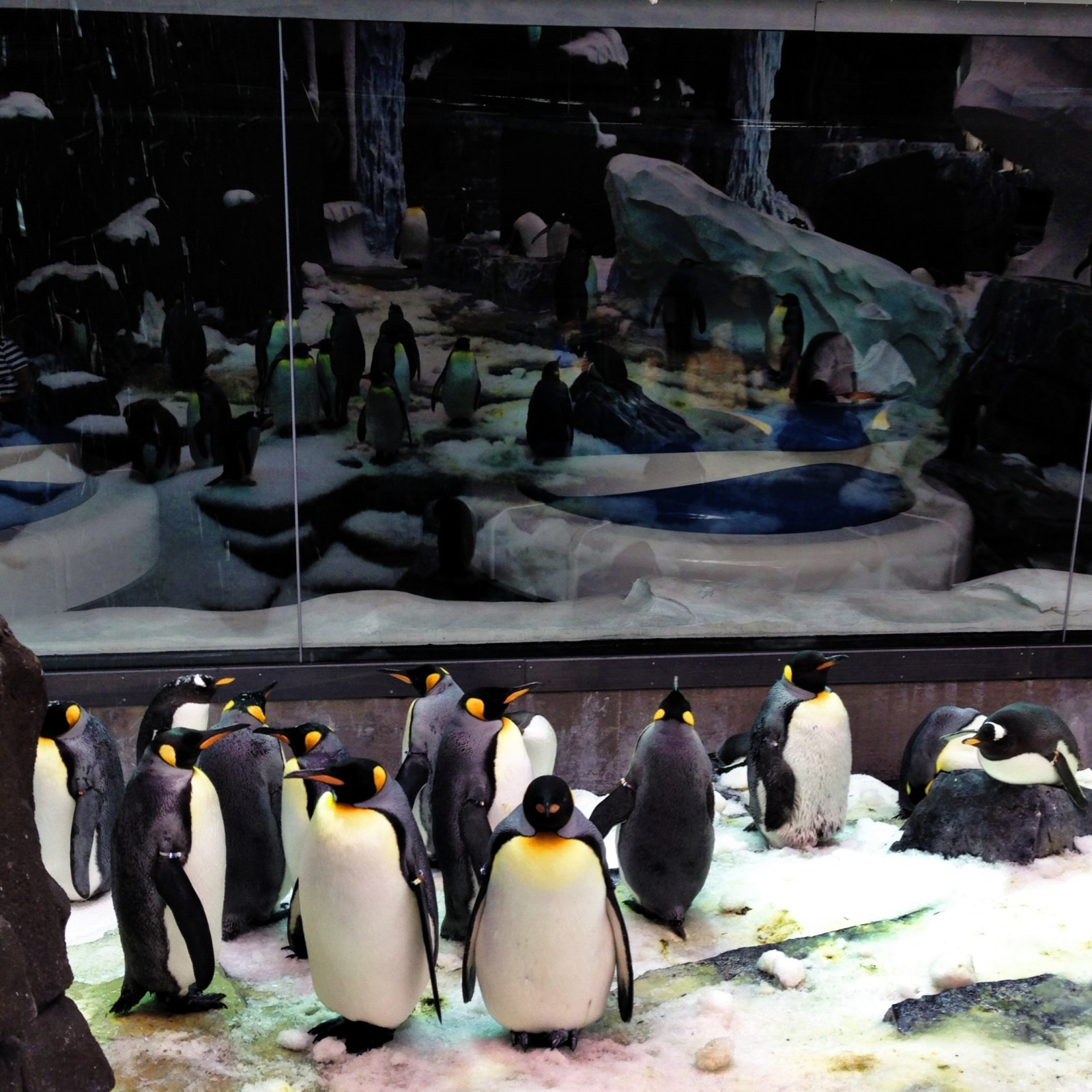 Penguins Up Close Tour