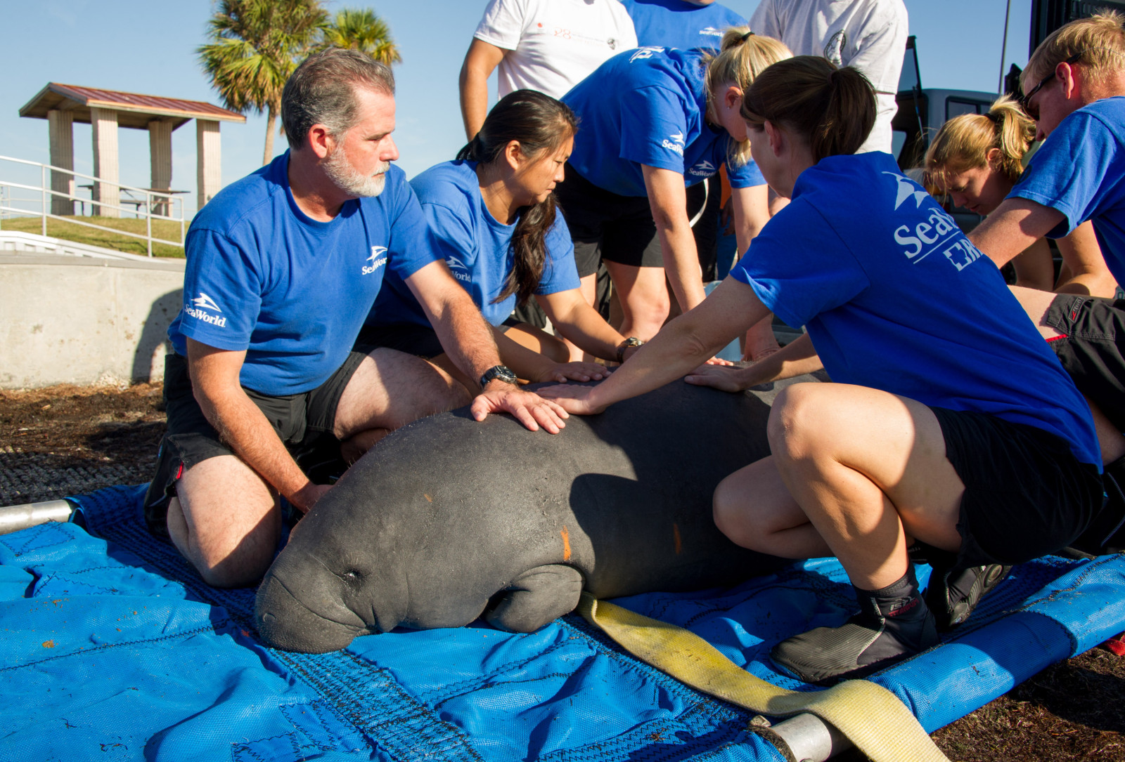 SeaWorld Orlando Animal Rescue Team