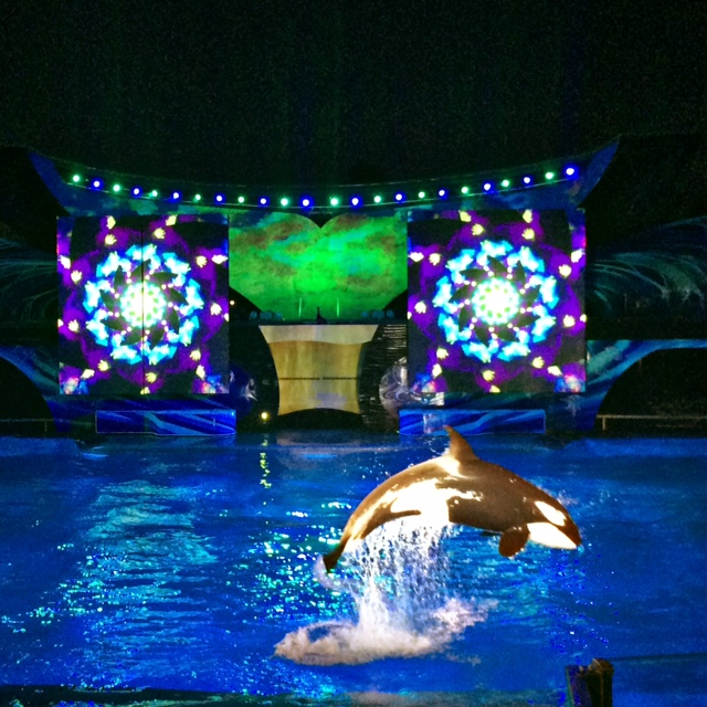 SeaWorld Orland Summer 2014