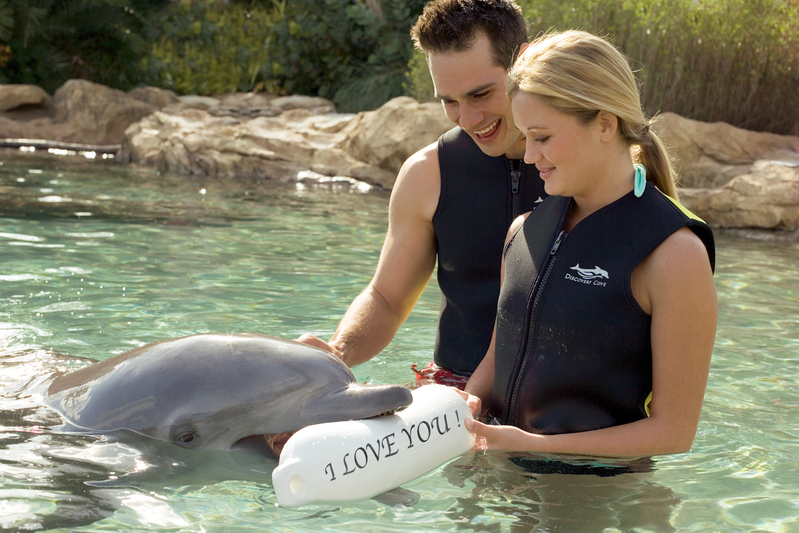 Discovery Cove Orlando Valentine's Day Dolphin Experience