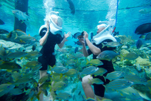 Discovery Cove Orlando Valentine's Day Dolphin Experience Grand Reef