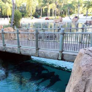 Discovery Cove The Grand Reef Walkway