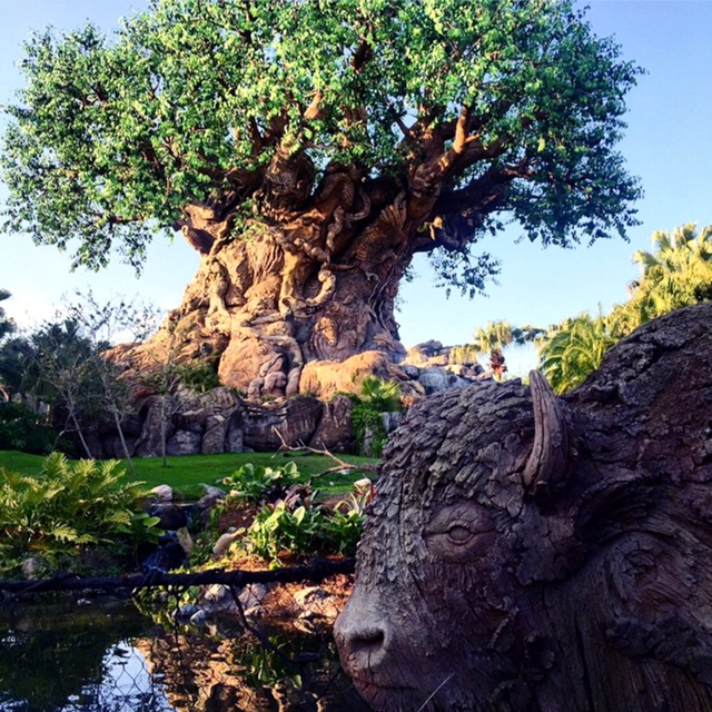 Magic Kingdom Walt Disney World Reopening WDW Walt Disney World Resort Wordless Wednesday Happy Earth Day Tree of Life Animal Kingdom