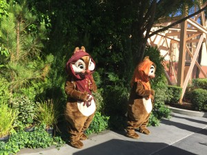 Chip and Dale new location