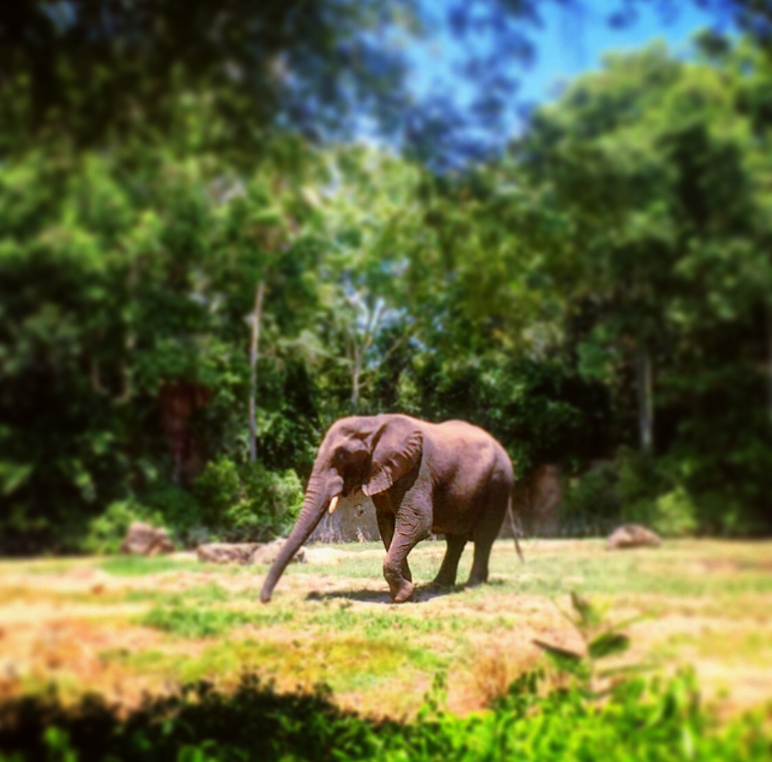 Wordless Wednesday Animal Kingdom Walt Disney World Elephant Safari