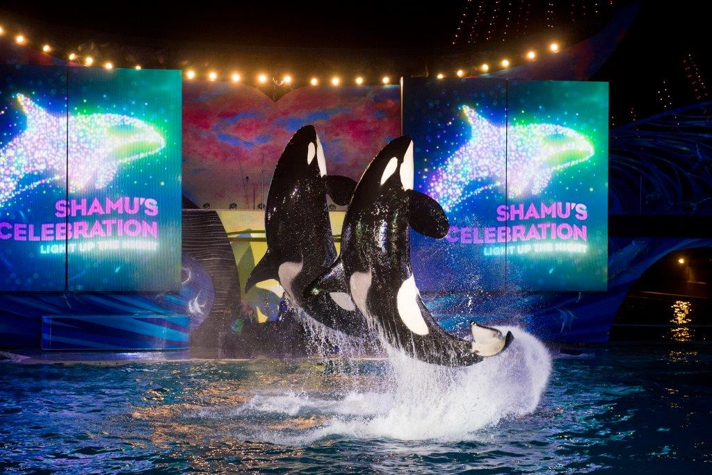 SeaWorld Orlando Summer Nights Shamu Light Up The Night