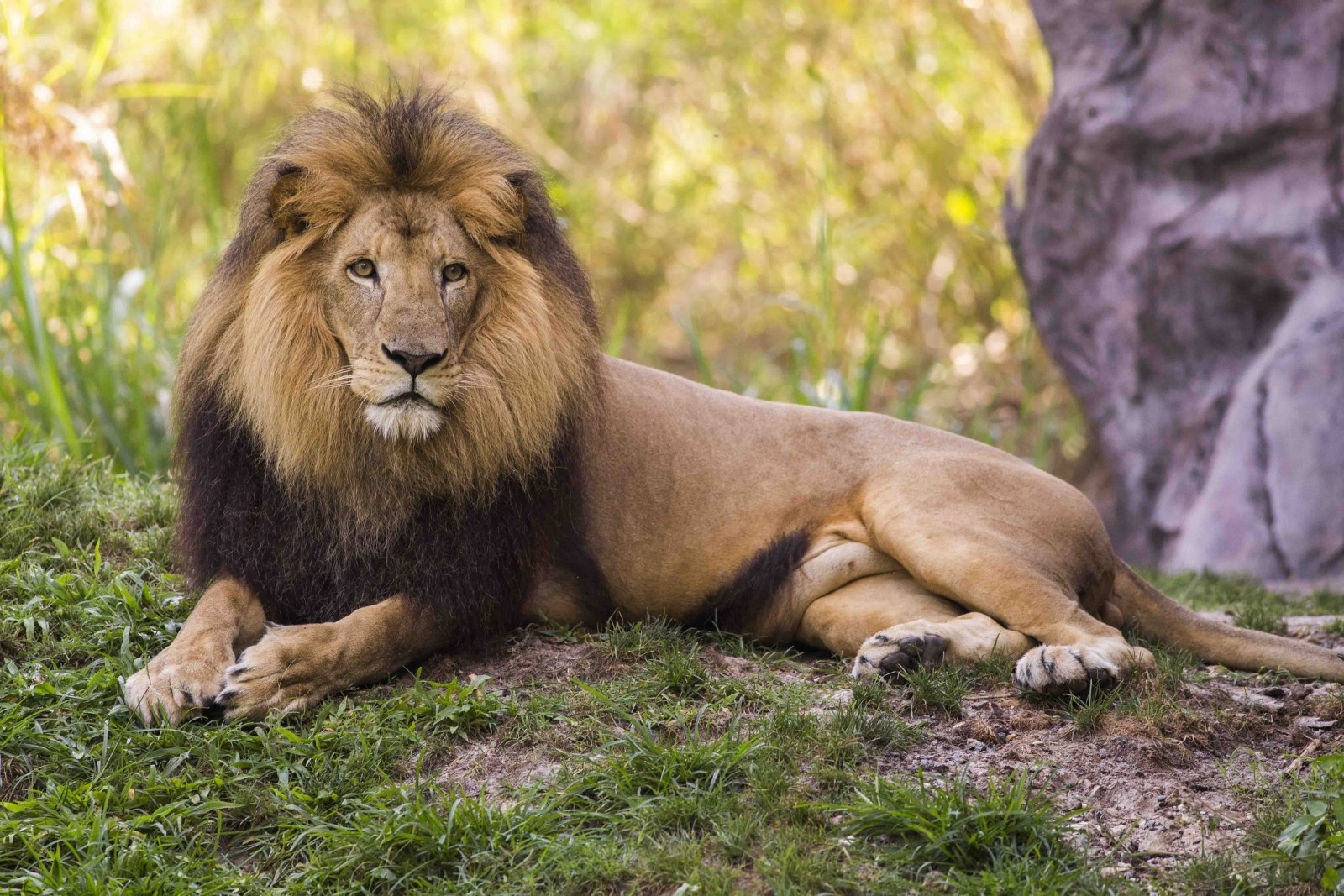 Busch Gardens Tampa World Lion Day 3 - On the Go in MCO