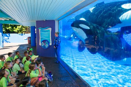 SeaWorld Orlando Summer Camps 2017 Campers at Underwater Viewing 2