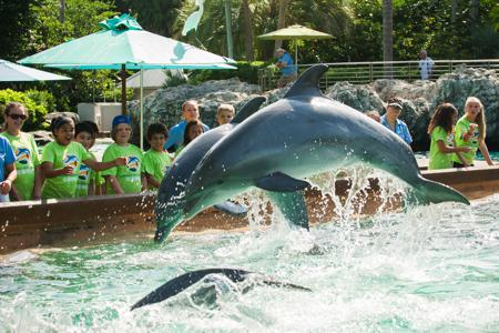 SeaWorld Orlando Summer Camps 2017 Campers watching dolphins jump