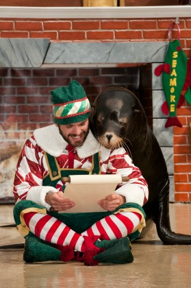 SeaWorld Orlando Christmas Celebration Clyde & Seamore's Countdown to Christmas