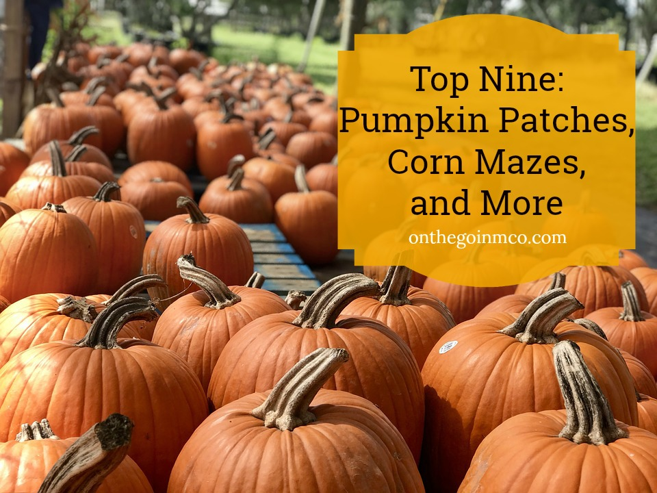 Top Nine: Pumpkin Patches, Corn Mazes, and More