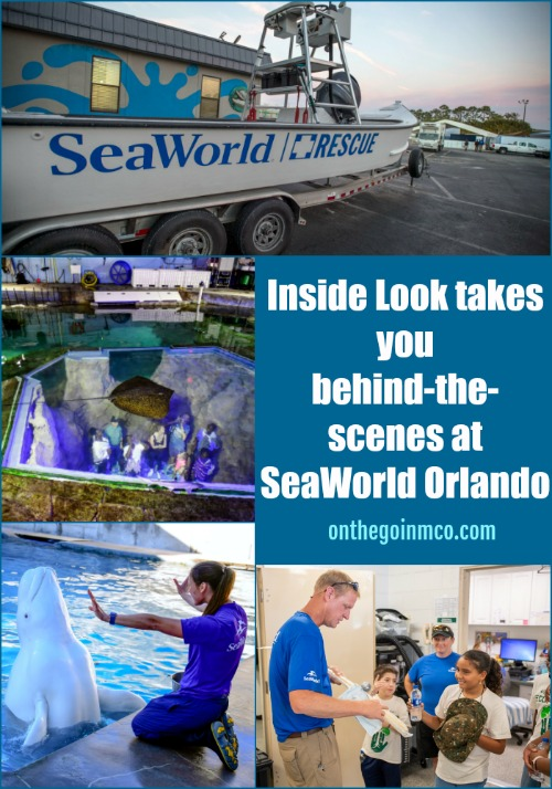 Inside Look at SeaWorld Orlando 2019