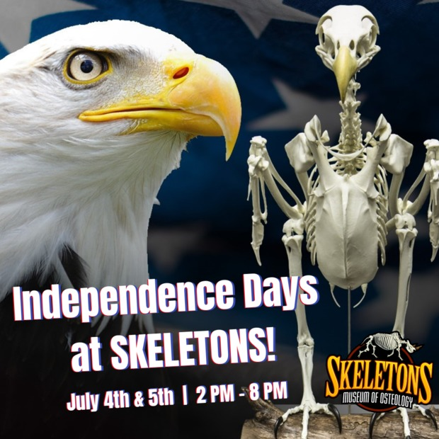 ICON Park Light Up I-Drive Skeletons Museum Fourth of July