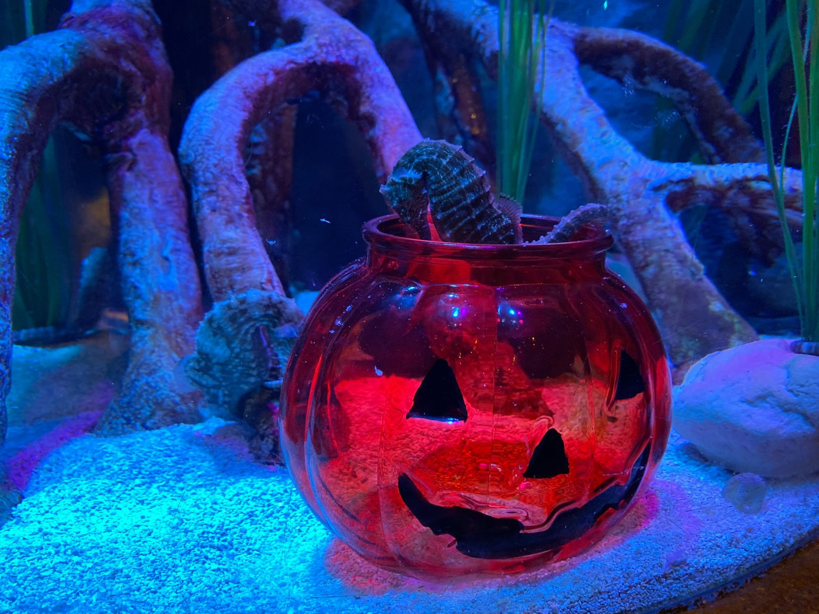Sea Life Spooky Seas Pumpkin Scavenger Hunt