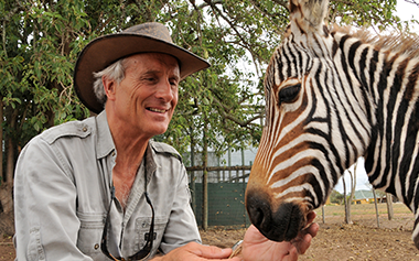Jack Hanna Weekend - Zebra