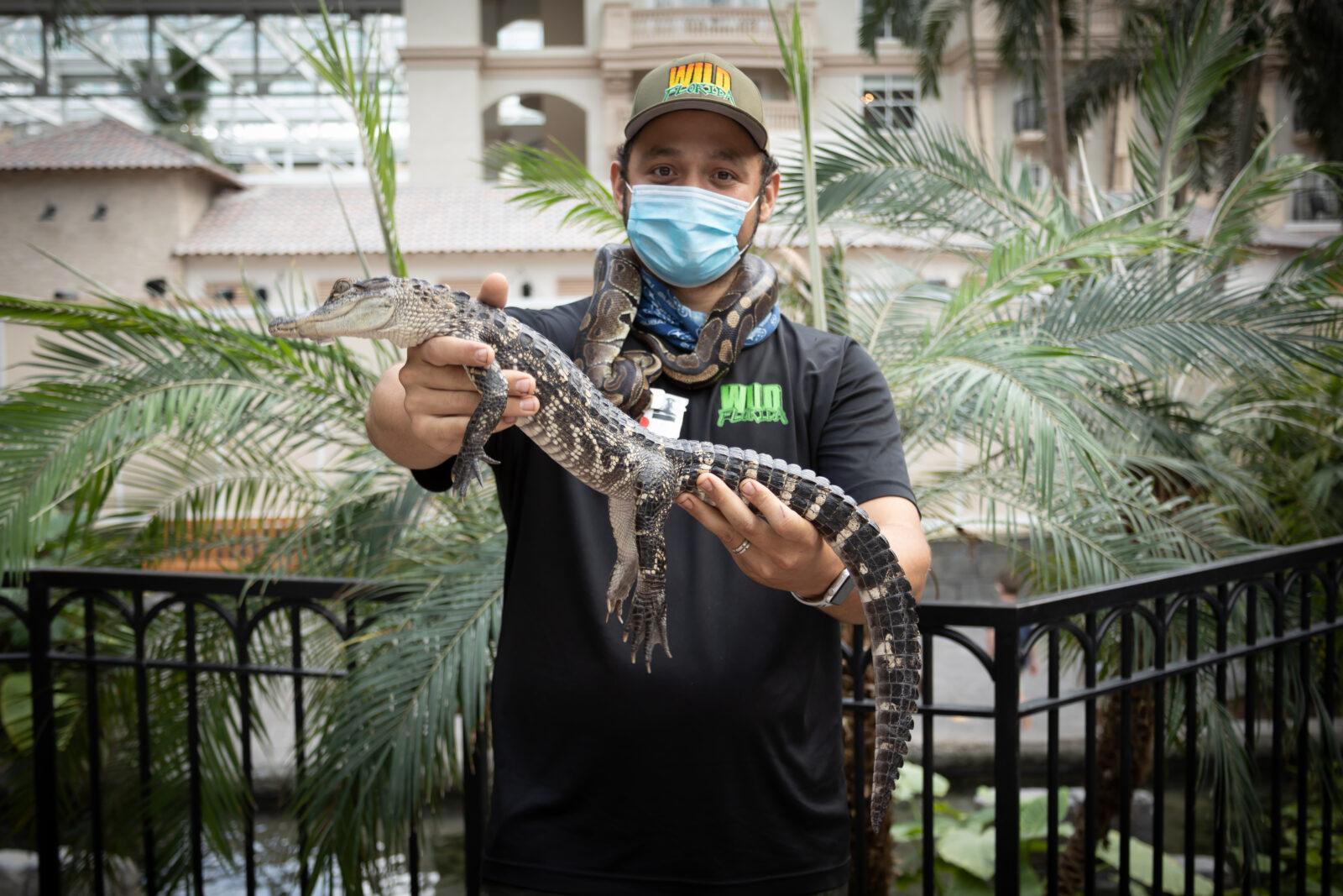 Gaylord Palms Partnership with Wild Florida