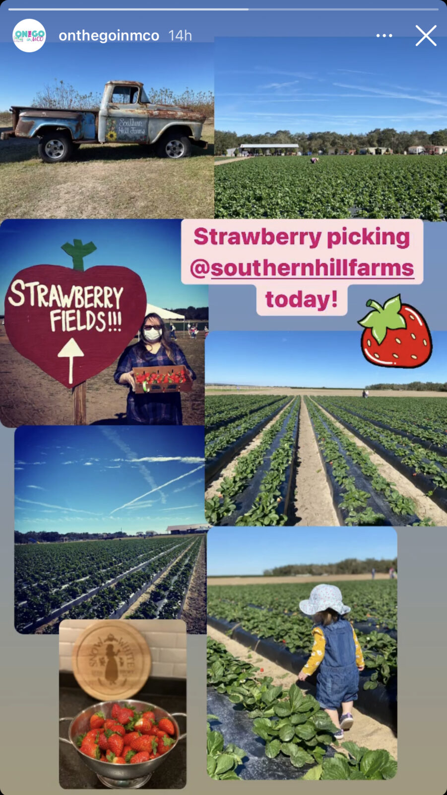 Southern Hill Farms Strawberry Picking with Gail and Harper