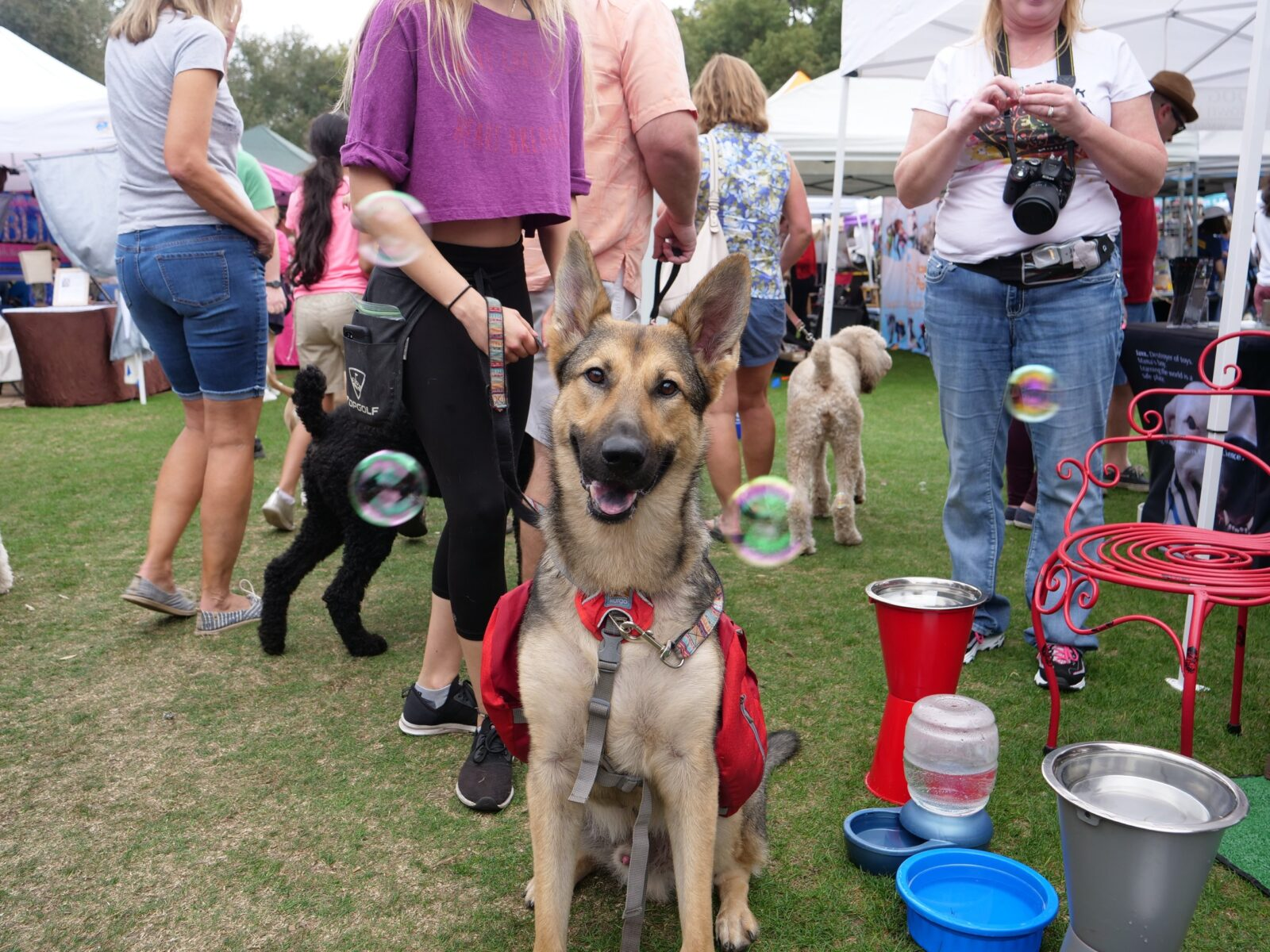 Paws in the Park 2021