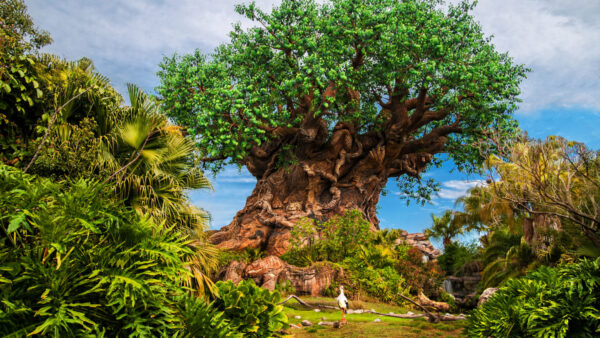Earth Week Disney's Animal Kingdom 2021 On the Go in the Parks
